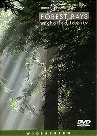 Nature's Balance : Forest Rays
