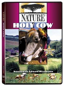 Nature: Holy Cow
