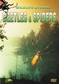 Wildlife Stories - The Whole Story: Beetles & Spiders