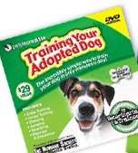 Training Your Adopted Dog