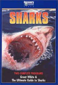 Great White/The Ultimate Guide To Sharks