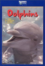 Dolphins - The Ultimate Guide