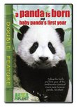 Panda Is Born & Baby Panda's First Year (Full)