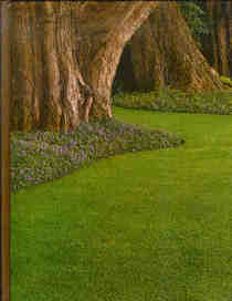 Time Life Encyclopedia of Gardening -- Lawn & Ground Covers