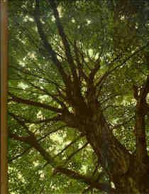 Time Life Encyclopedia of Gardening -- Trees