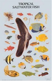 Tropical Saltwater Fish Poster (Posters)