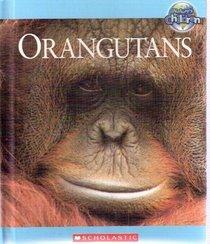 Orangutans - Nature's Children