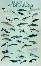Dolphins and Porpoises Poster