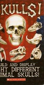 Heads Up A look inside Skulls