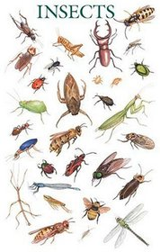 Insects Poster (Posters)