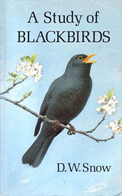 A Study of Blackbirds
