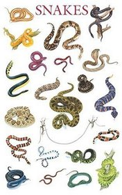 Snakes Poster