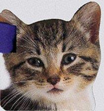Buggy Books: Kitten