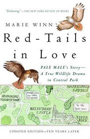 Red-Tails in Love : A True Wildlife Drama in Central Park