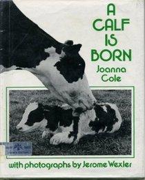 A Calf Is Born