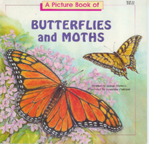 A Picture Book of Butterflies and Moths