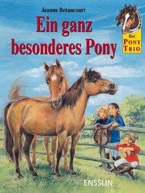 Das Pony-Trio. Ein ganz besonderes Pony