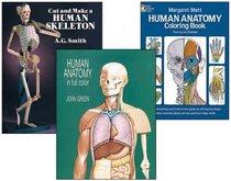 Human Anatomy Activity Set