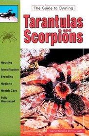 Tarantulas and Scorpions