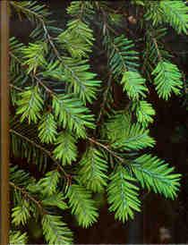 Time Life Encyclopedia of Gardening -- Evergreens