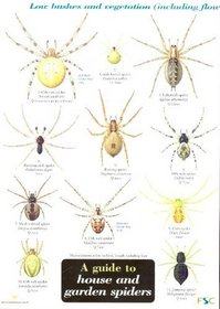 A Guide to House and Garden Spiders