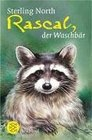 Rascal der Waschbr