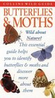 Butterflies  Moths of Britain and Europe