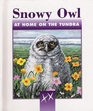 Snowy owl: At home on the tundra