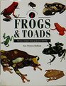 Frogs  Toads A New Compact Study Guide and Identifier