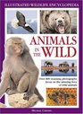 Illustrated Nature Encyclopedia Animals in the Wild