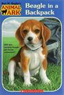 Beagle in a Backpack