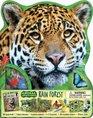 Animal Adventures Rain Forest