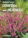 Making the Most of Conifers  Heathers