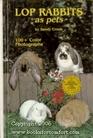 Lop rabbits as pets