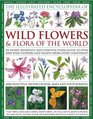 Illustrated Encyclopedia of Wild Flowers  Flora of the World