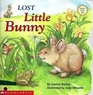 Lost Little Bunny