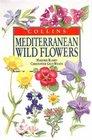 Mediterranean Wild Flowers