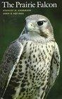 The Prairie Falcon