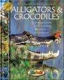 Alligators  Crocodiles