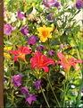 Time-Life Encyclopedia of Gardening: Perennials