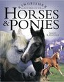 Horses and Ponies (Kingfisher Riding Club)
