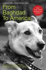 From Baghdad to America Life after War for a Marine and His Rescued Dog