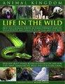 Animal Kingdom Life in the Wild