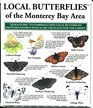 Local Butterflies of the Monterey Bay Area