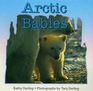 Arctic Babies (Books for Young Readers)