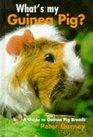 What's My Guinea Pig A Guide to Guinea Pig Breeds