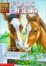Foals in the Field (Animal Ark, Bk 24)