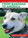 From Baghdad to America Life Lessons from a Dog Named Lava