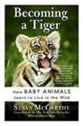 Becoming a Tiger How Baby Animals Learn to Live in the Wild