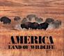 America Land of Wildlife